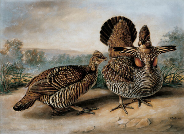 Two ruffed grouse are in the foreground with a landscape in the background. (The birds are actually prairie chickens.)