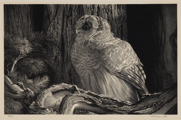 A owl sits on a gnarly tree with a wide tree trunk behind and pine needles at the left.