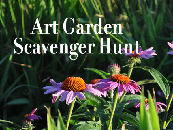 Photo of a pink cornflower with grass in the background and the words Art Garden Scavenger Hunt overlaid in a white font