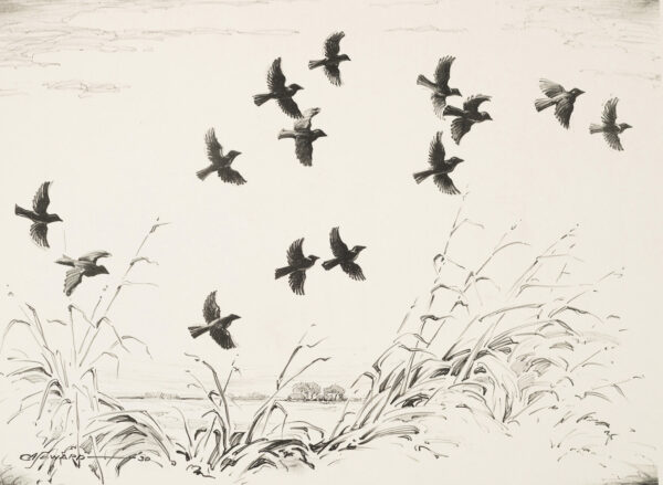 A flock of blackbirds in flight over a landscape of cattails